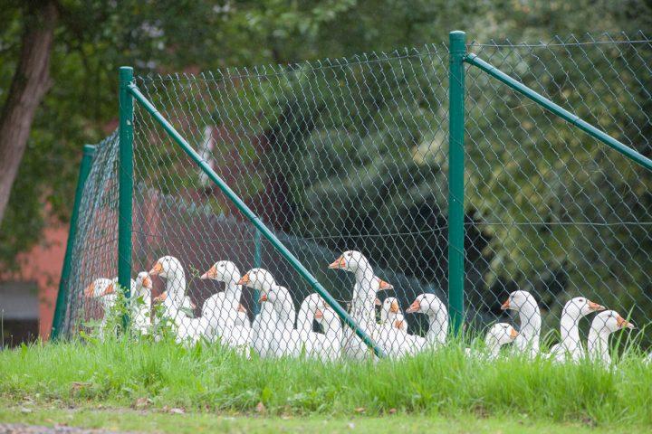 Außenwohngruppe Bauernhof Galerie: Bild 2